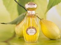 limon-kolonyasi